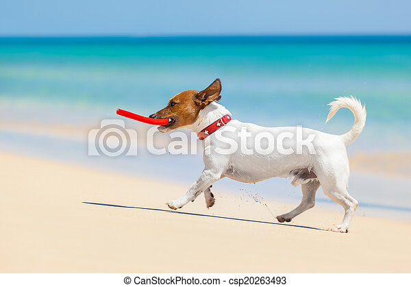 dog frisbee - csp20263493