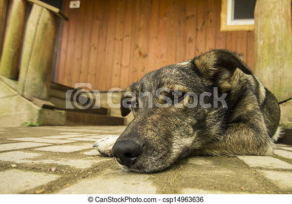 dog guarding house near stairway - csp14963636