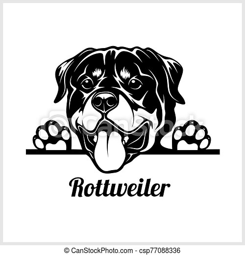 dog head, rottweiler breed, black and white illustration - csp77088336