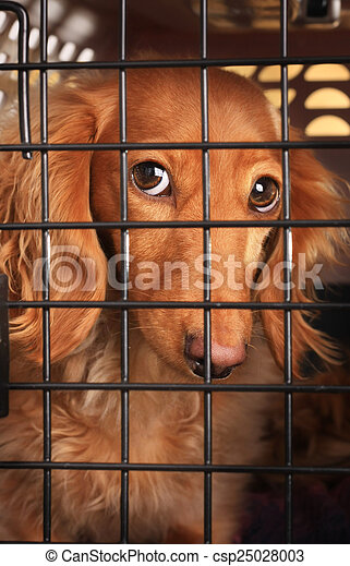 Dog in a cage. - csp25028003