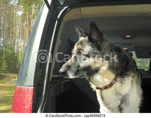 Dog In A Car - csp46566574