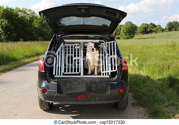Dog in a car - csp15017330