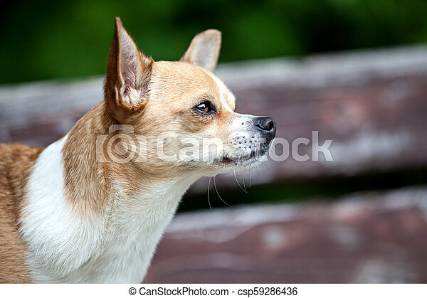 Dog in a garden - csp59286436