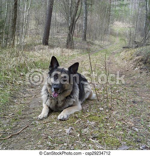 Dog In Alert - csp29234712