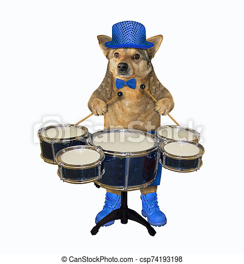 Dog In Blue Hat Plays The Drums The Dog Musician In A Blue Hat Bow Tie And Boots Plays The Drums White Background Canstock