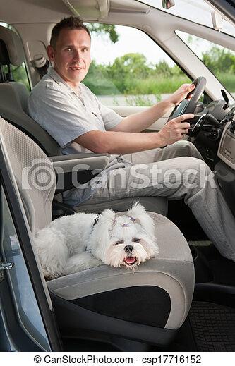 Dog in car - csp17716152