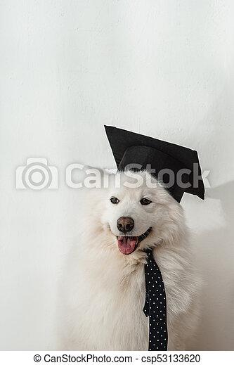 Wonderful Graduation Cap Black Adorable Dog - dog-in-graduation-hat-stock-photo_csp53133620  Pic_2510046  .jpg