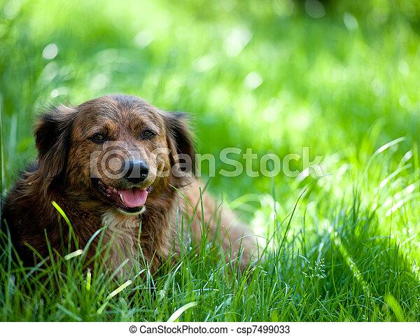 Dog in Grass - csp7499033