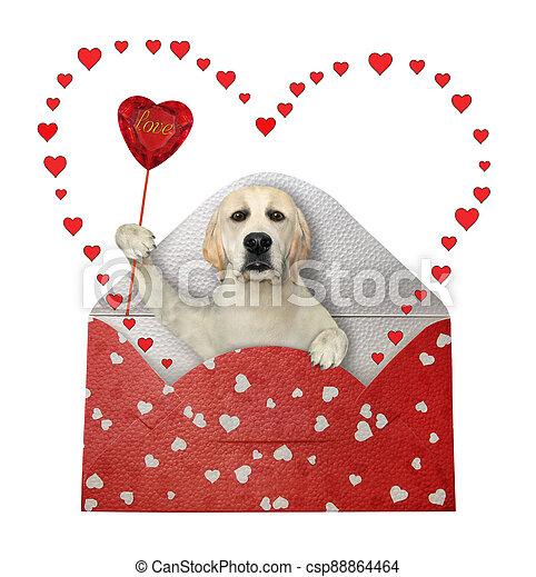 Dog in holiday envelope - csp88864464