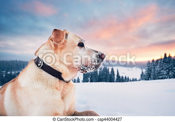 Dog in mountains in winter - csp44004427