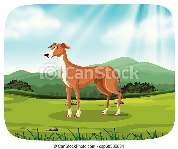 Dog in nature scene - csp68585834