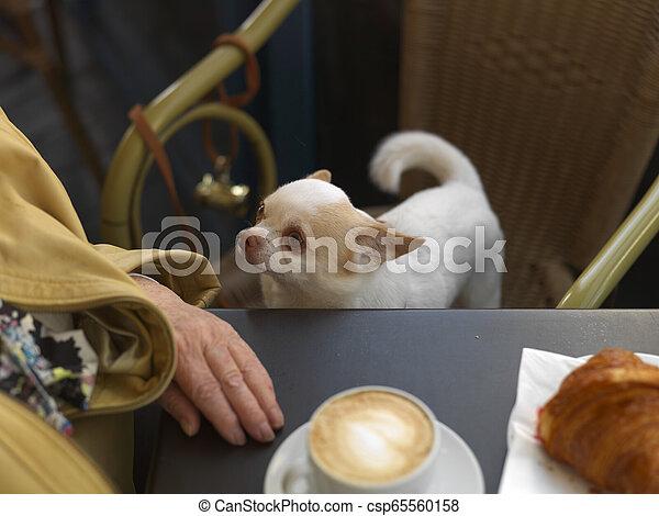 Dog In Restaurant - csp65560158