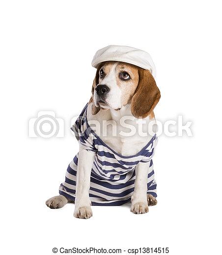 Dog in studio - csp13814515