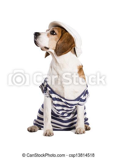 Dog in studio - csp13814518