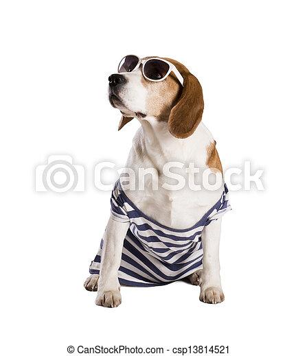 Dog in studio - csp13814521