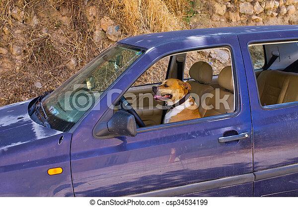 Dog in the car - csp34534199