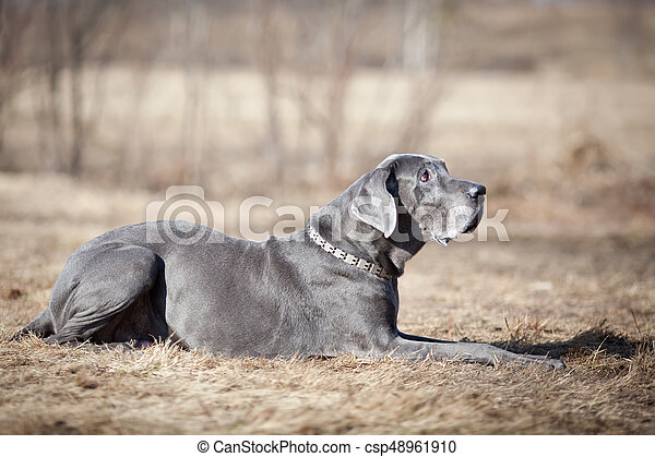 Dog in the field - csp48961910