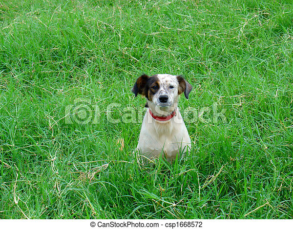 Dog in the field - csp1668572