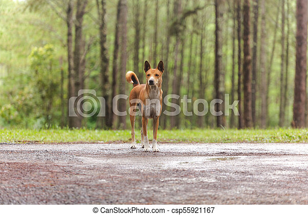 Dog in the pine forest - csp55921167