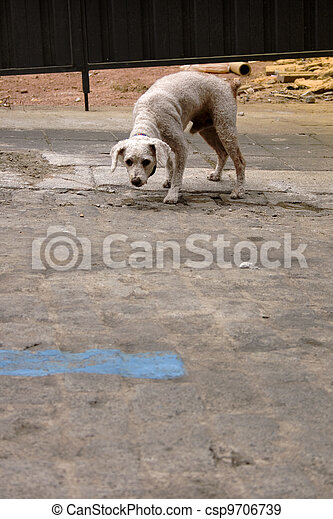 Dog in the street - csp9706739