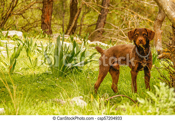 Dog in the woods - csp57204933