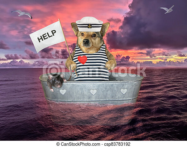 Dog in washtub on sea after shipwreck - csp83783192