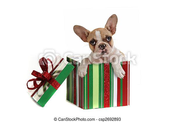 Dog Inside a Christmas Gift - csp2692893