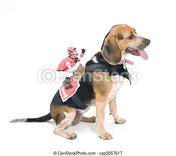 dog jockey dog with jockey costume telefono de pet house jockey plaza pet house jockey plaza precios