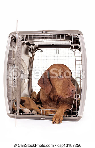 dog laying in crate - csp13187256