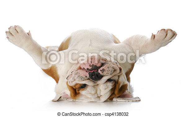 dog laying on his back - csp4138032