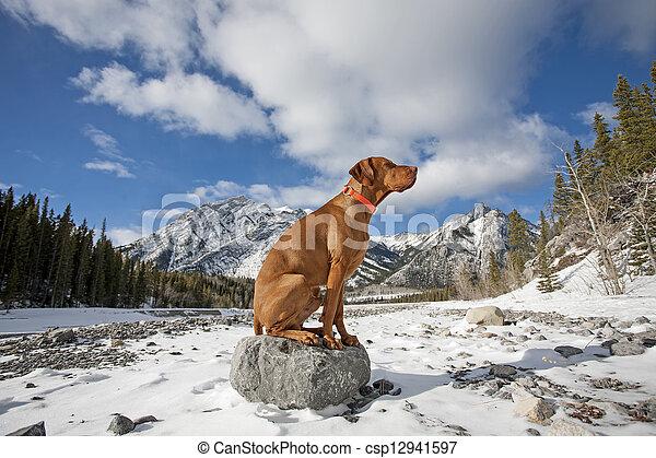 dog like a statue - csp12941597