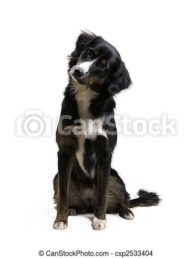 Dog - Listening - csp2533404