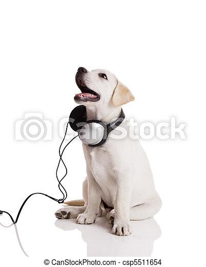 Dog listening to music - csp5511654