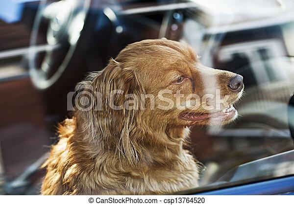 Dog locked in car - csp13764520