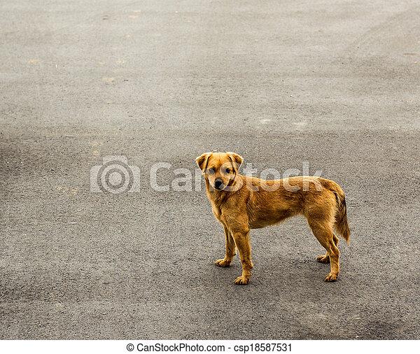 dog looking at the camera - csp18587531