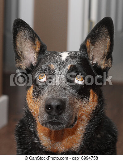 Dog looking straight up - csp16994758