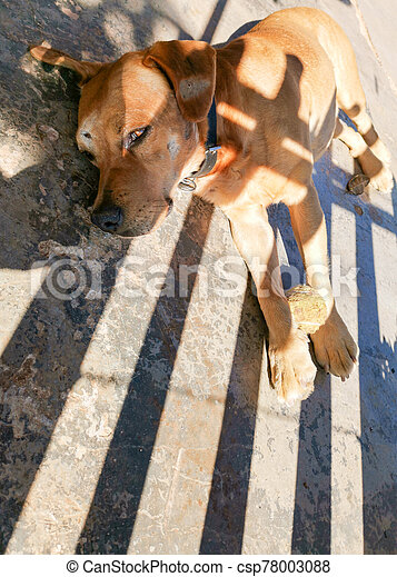 dog lying with sad face - csp78003088