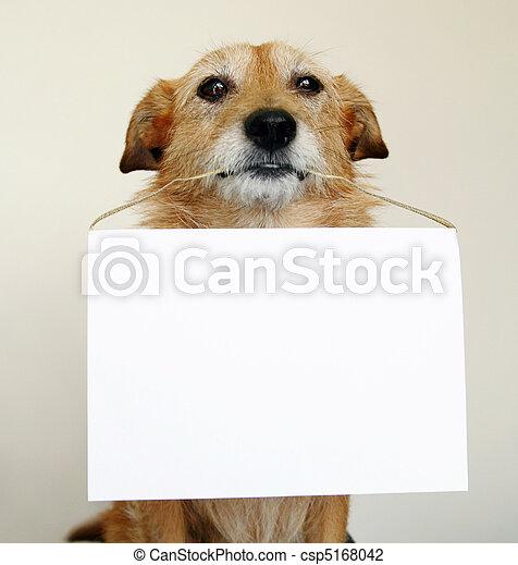 dog, meldingsbord, scruffy, vasthouden, leeg - csp5168042