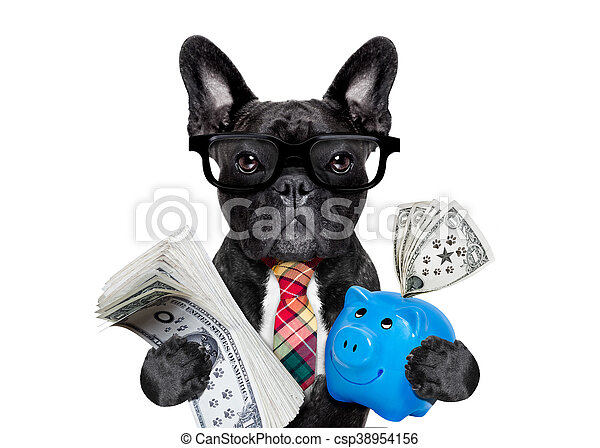 dog money and piggy bank - csp38954156