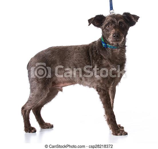 dog on a leash - csp28218372