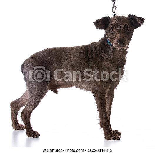 dog on a leash - csp28844313
