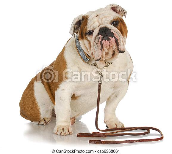 dog on a leash - csp6368061