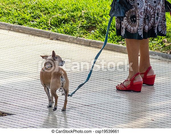 dog on a leash - csp19539661