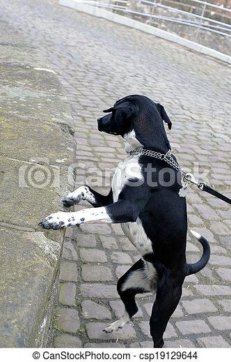 Dog on a leash - csp19129644