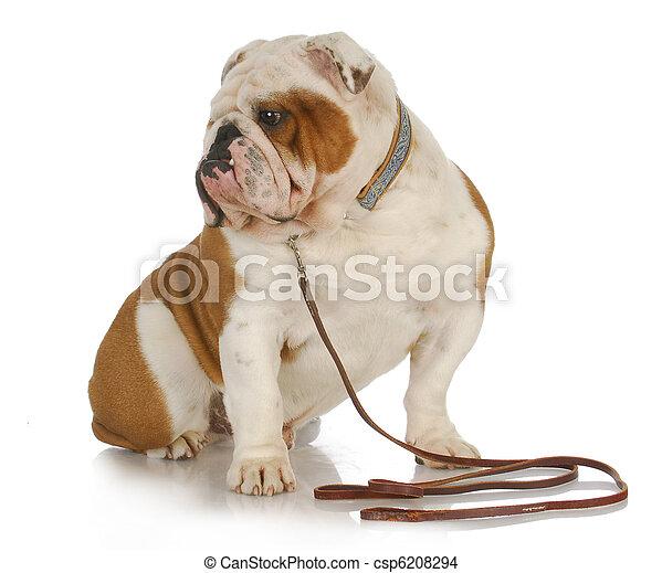 dog on a leash - csp6208294