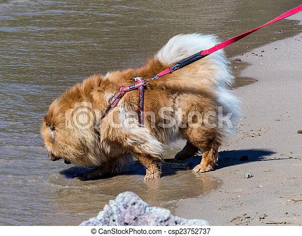 dog on a leash - csp23752737