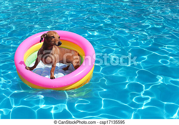 dog on airbed in the pool  - csp17135595