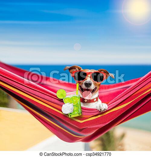 dog on hammock in summer - csp34921770