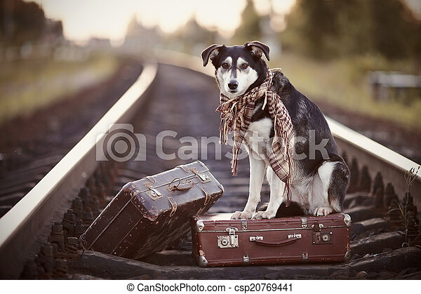 Dog on rails with suitcases. - csp20769441