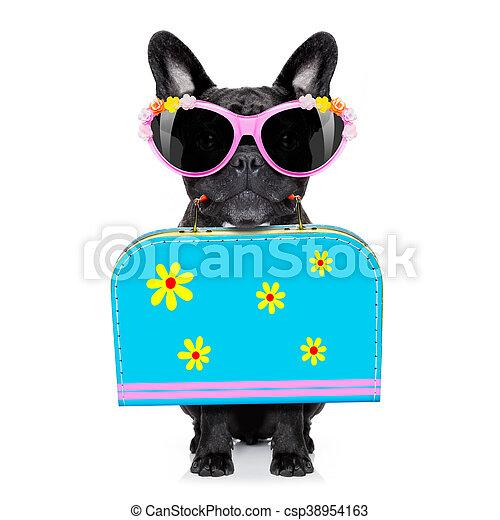 dog on summer  holiday vacation - csp38954163